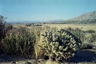 The Accidental Cactus