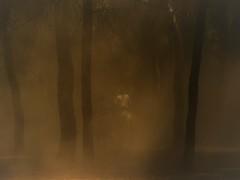 entre el polvo.saca de las yeguas18 (lorenzo g.macias) Tags: saca de las yeguas polvo campo caballos marismeño el rocio almonte huelva