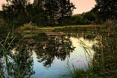 In den Rheinauen bei Karlsruhe (MHikeBike) Tags: see landschaft abend sonnenuntergang sunset farbig himmel wasser büsche wald rheinebene rhein lake landscape eve coloured sky water shrubbery