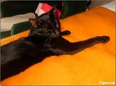 Minou sur le lit d'Isa (Figareine- Michelle) Tags: chat coth alittlebeauty coth5