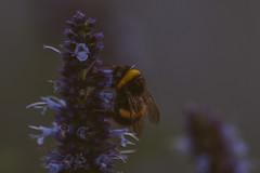 DSC_3347 (velvetgoldmine82) Tags: kew gardens botanical london nature macro wanderlust vsco flowers summer nikon d750 105mm