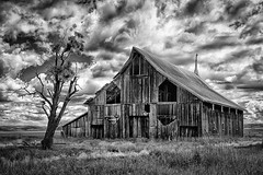 One Tree Barn (D E Pabst Photography) Tags: agriculture asotincounty abandoned southeastwashington decay wooden barn monochrome blackandwhite neglected farm anatone tree rural washington