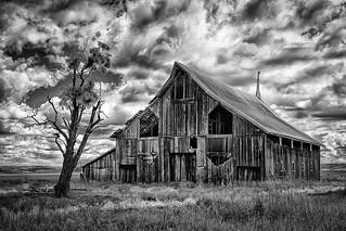One Tree Barn