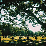 Peace in the cemetery thumbnail