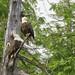 Eagles 5n