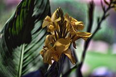 PAS_3681 (peterstratmoen) Tags: wildflowers nature naturebynikon