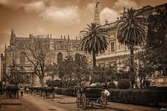 Archives générales des Indes et cathédrale de Séville !! (thierrymazel) Tags: caleches ville seville sevilla espagne andalousie spain monuments architecture cathedrale sepia vignetage