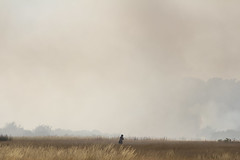 A tiny figure crosses Wanstead Flats with smoke from a fire in the background (ArtGordon1) Tags: wansteadflats wanstead london england uk summer july 2018 fire danger davegordon davidgordon daveartgordon daveagordon artgordon1