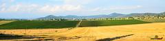 A-LUR_6404 (OrNeSsInA) Tags: panicale paciano trasimeno umbria italia italy natura panorami landescape