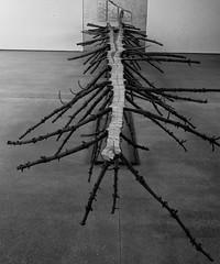 Split tree, by Guiseppe Penone (Allan Rostron) Tags: leicaq yorkshire wakefield art yorkshiresculpturepark