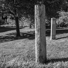 IMGP3412 (agianelo) Tags: telephone utility pole lawn tree grass monochrome bw bn blackandwhite