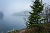 Little Two Harbors, Minnesota 20180525-DSC07424 (Rocks and Waters) Tags: sonyalpha 1805xxnorthshore lakelakesuperior littletwoharbors minnesota morning northshore river splitrocklighthouse zeiss a7r2 fog landscape loxia loxia235 mist nature rocksandwaters sony spring woods