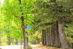 Oyama shrine - Kanazawa (cattan2011) Tags: 日本 japan kanazawa nationalpark oyamashrine culture green naturelovers natureperfection naturephotography nature traveltuesday travelphotography travelbloggers travel streetart streetpicture streetphoto streetphotography landscapephotography landscape