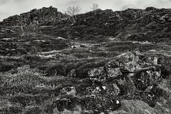 Þingvellir (5) (pni) Tags: monochrome grass tree landscape view stone rock sky cloud þingvellir is18 iceland ísland pekkanikrus skrubu pni
