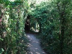 Passage of nature (Phil Gayton) Tags: path track tree foliage tunnel passage nature scenery riverside walk river dart totnes devon uk