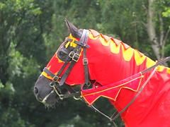DSCF3631 (SierPinskiA) Tags: ruffordabbeycountrypark rufford knightsofnottingham fujixs1 jousting medieval horse knights goldeneagle falcon