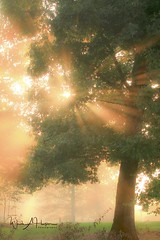 Through the Trees (Catch the Moment Photography) Tags: landscapes landscapephotography sunlight fog trees branches leaves rays wadehooperphotography warmglow sun sunrise sunset scenic grass