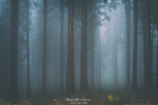 Forest's whispers