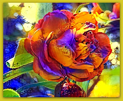 Goodness is the only investment that never fails. (Henry David Thoreau) (boeckli) Tags: rainbow regenbogen bunt farbig farbenfroh colourful colorful colours catchycolours flowers flower flora fleur camellia kamelie plants plant pflanzen textures texturen texture textur ddg photoborder deepdreamgenerator