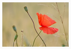 L'effet papillon (marc.lacampagne) Tags: nature fleur dslr canon tamron 28 dof ngc macro detail explore soe eos
