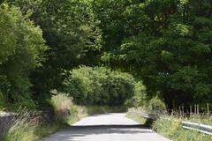 Natura (pasqualetassone) Tags: sila calabria montagna catanzaro