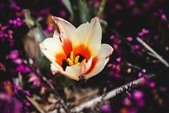 Parc de Mariemont 08-04-18 015 (TM-Photography.be) Tags: parc mariemont pixll photoclub spring nature belgique hainaut morlanwelz