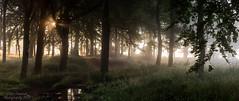 Woodland Daybreak Derbyshire (stevef16G) Tags: derbyshire dales woodland sunrise sunlight view peakdistrict panoramic vista olympus outdoorphotography em1mk2