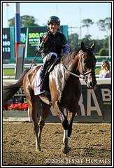 Diversify (Spruceton Spook) Tags: horseracing horses belmontpark starsandstripesfestival diversify suburban