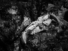 Feeling Crabby...... (mikeeaston206) Tags: pentax 6x7 55mm ilford delta100 monochrome nature beach lowtide rodinal