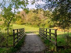 Autumn Bridge (Matthew_Hartley) Tags: autumn fall bridge tree trees leaves helmshore haslingden rossendale lancashire northwest england uk britain panasonic gm1 lumix 1232 1232mm river ogden