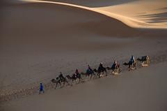 The caravan, Sahara, Morocco (nuriapase) Tags: marroc morocco sahara desert landscape sand guide camel caravan people dune light shadow travel