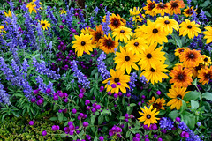 Garden in Alhambra, Spain (Marian Pollock) Tags: granada spain europe flowers colourful yellow purple lavender nature design gardenbed