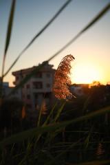 Before Sunset (24) (Polis Poliviou) Tags: nicosia lefkosia street summer capital life live polispoliviou polis poliviou πολυσ πολυβιου cyprus cyprustheallyearroundisland cyprusinyourheart yearroundisland zypern republicofcyprus κύπροσ cipro кипър chypre chipir chipre кіпр kipras ciprus cypr кипар cypern kypr ©polispoliviou2018 streetphotos europe building streetphotography urbanphotography urban heritage people mediterranean roads afternoon architecture buildings 2018 city town travel naturephotography naturephotos urbanphotos neighborhood