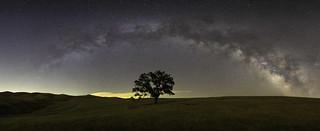 Milky Way Lone Tree
