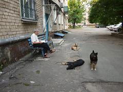 P7090234 1 (vovanli62) Tags: panasonic lumix 14mm f25 asph pancake donbass ukraine stakhanovkadievka ukraina