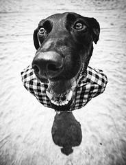 What's up dawg? (Johnidis) Tags: dog doggo dawg shirt sir portrait mr giannis kritikos johnidis animal man