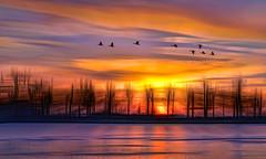 Solitude-364 (Wim Koopman) Tags: flowing glowing reflection graphical digital holland netherlands dutch impression goudriaan slingeland plassen pond lake