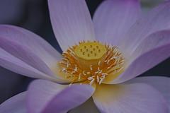 20180721_法金剛院_0041_sdQuattroH (mu_x2012) Tags: sigma sd quattro h 70mm f28 dg macro art houkonngouinn kyoto japan