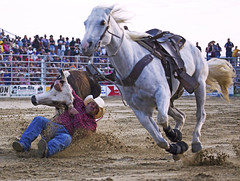 (emmett.hume) Tags: summer competition contest horse rodeo west tradition america grit challenge determination wrestling steer equine sport athletics prosports 1025fav