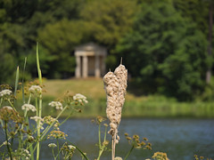 Summertime by the lake (ORIONSM) Tags: summertime lake water dof temple doric bowood plant nature bokeh lakeside olympus omdem1 olympus14150mm