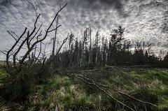 Broken Forest (Glen Parry Photography) Tags: glenparryphotography landscape country d7000 nikon outdoors reservoir sigma sigma1020mm uk widdop widdopreservoir