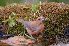 Crociere _002 (Rolando CRINITI) Tags: crociere uccelli uccello birds ornitologia montebaldo natura