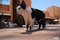 Cat @ Marrakech (morbidtibor) Tags: cat kat kater poes pussycat kitten marocco marokko marrakech