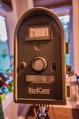 BirdCam-2_MaxHDR_Dehaze (old_hippy1948) Tags: birdcam