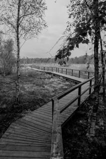 marshland 4