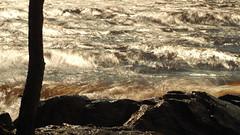 Waves on the Lake (jurgenkubel) Tags: vågor waves lake sjö see insjö finland finnland tree baum träd karelia karelen