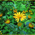 Golden Flowers thumbnail