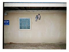 Pair of Hooters (@fotodudenz) Tags: fuji fujifilm ga645w ga645wi medium format film rangefinder point and shoot wide angle super 28mm 45mm albert park lake melbourne victoria australia 2018 kodak portra 400 owls decoy decoys wooden boat association