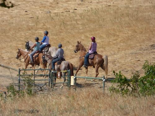 2018-07-04 - Visiting Contra Loma Regional Park