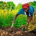 USAID_PRADDII_CoteD'Ivoire_2017-266.jpg